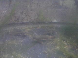 river_fish_20090620_03.JPG