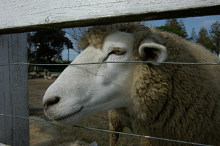 20091010_mather_farm_03.JPG