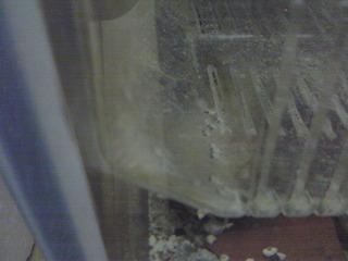 leleupiF2_20091206.JPG