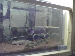 45cm_tank_20091230.JPG